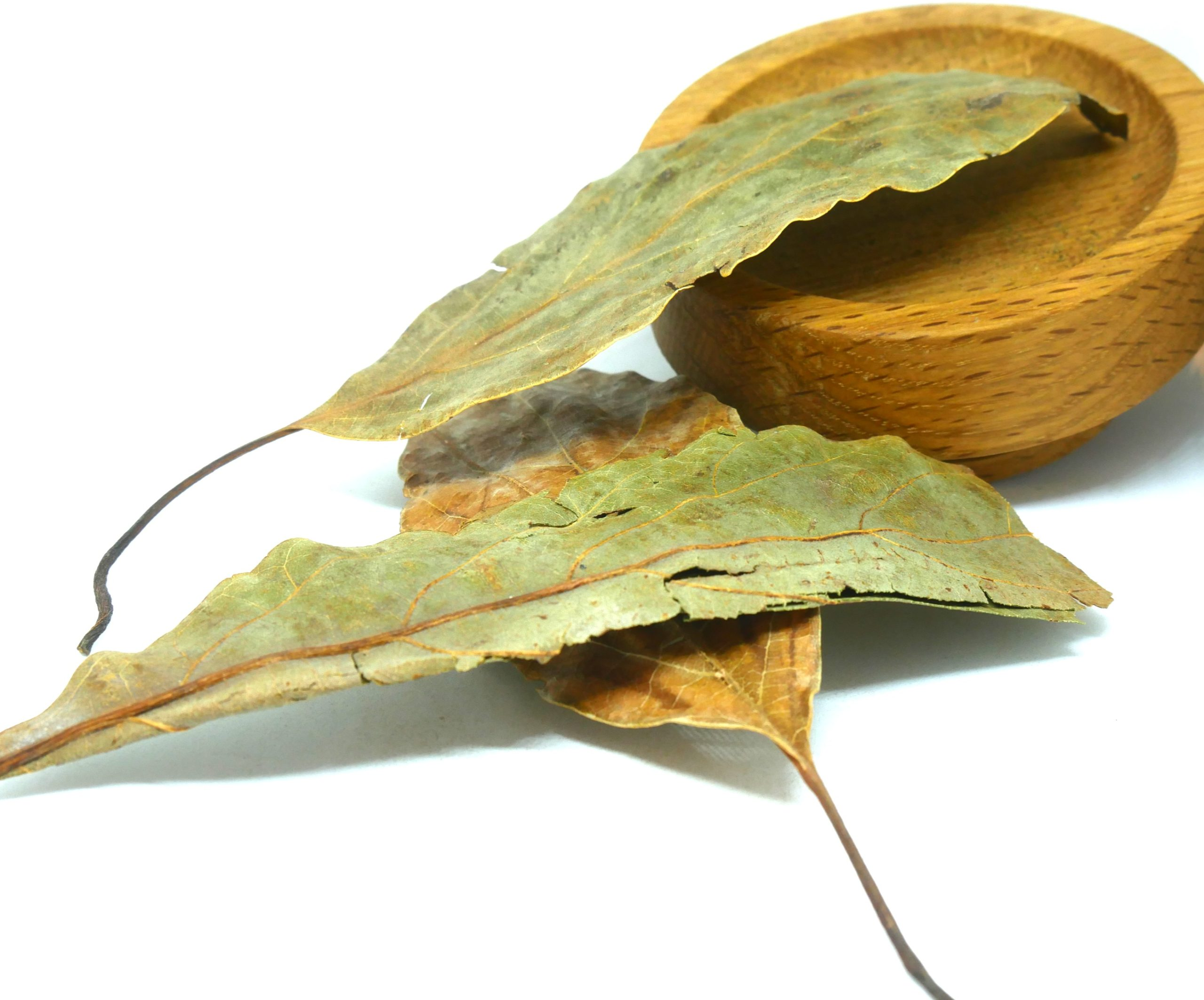 Avocado Leaves from the Natural Spot