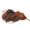 Order Dried Ghost Chile peppers from The Natural Spot